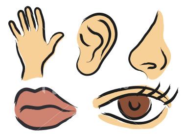 Juneswritingroomsenses on Five Senses